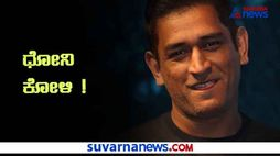 MS Dhoni set for Poultry Farming Orders 2 thousand Kadaknath Chickens hls